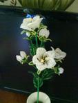 эустома цветок такой.